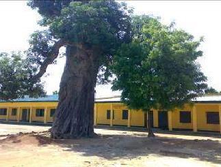 Shady baobab