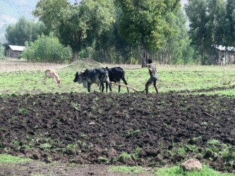 DFID is helping to improve agriculture in Ethiopia