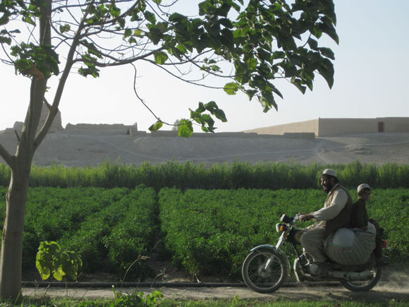 Photo of a man driving a motorbike past a nursery