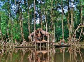 Mangroves –a key coastal protection adaptation strategy for some but home for others.