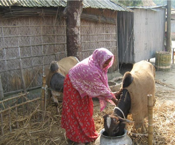 A girl looking after her goat