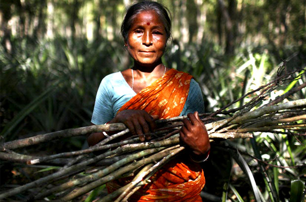 A woman collects firewood from the forest. Picture: G.M.B.Akash/Panos